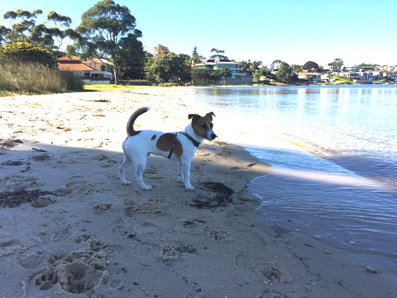 South Perth Foreshore Dog Friendly