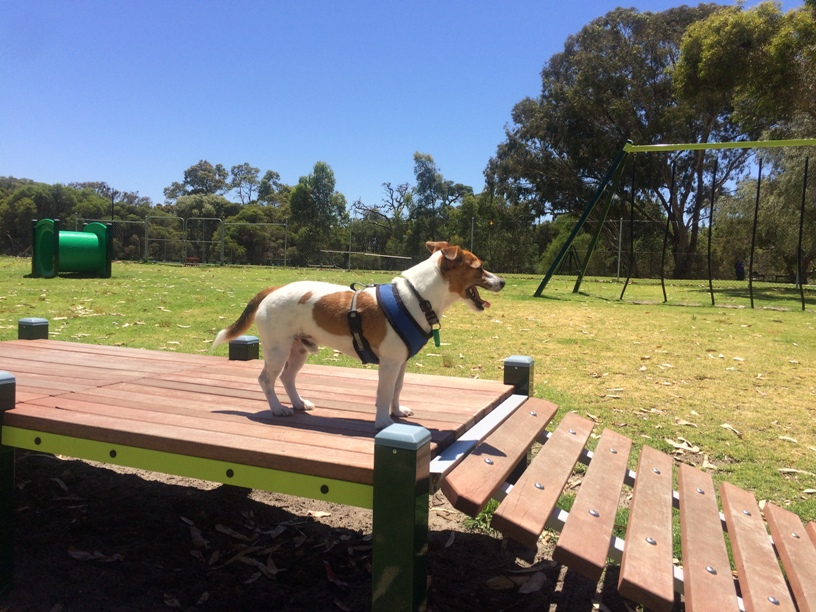 Dog Parks With Agility Equipment Perth